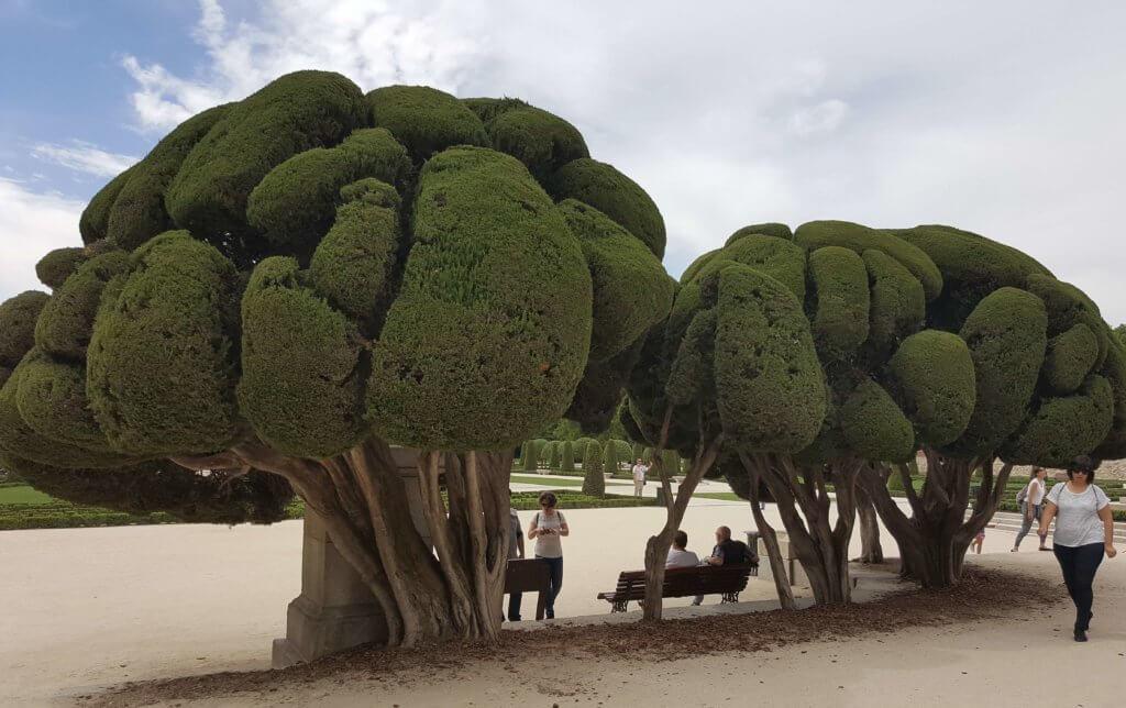 Bonsai-Bäume im Retiro-Park
