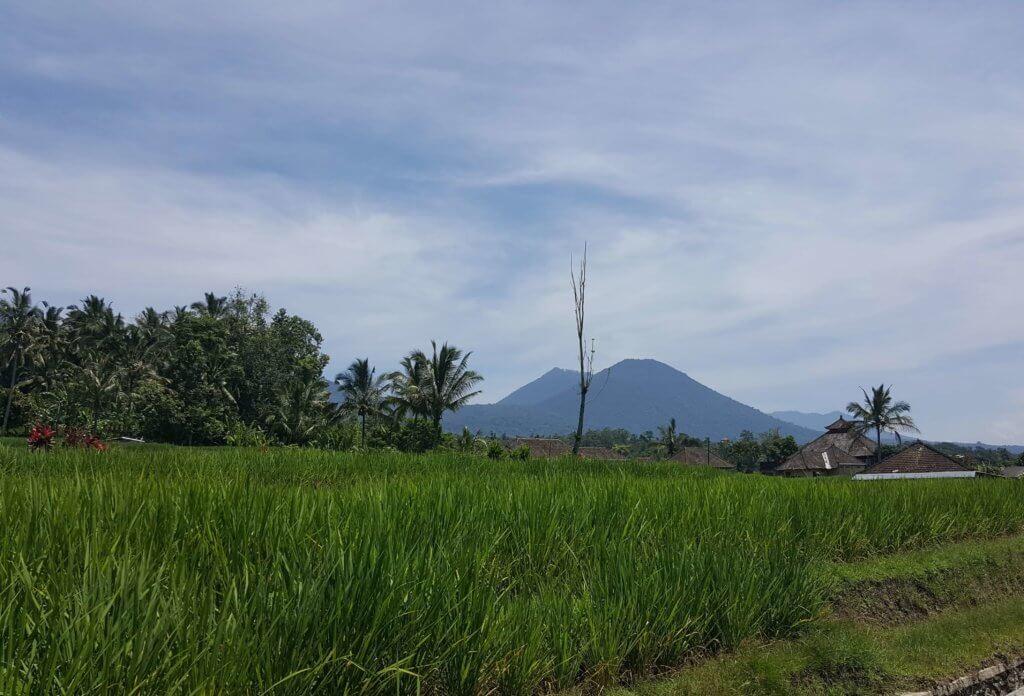 die schöne grüne Landschaft