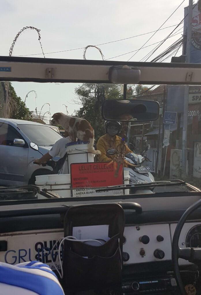 Ladungssicherung in Bali