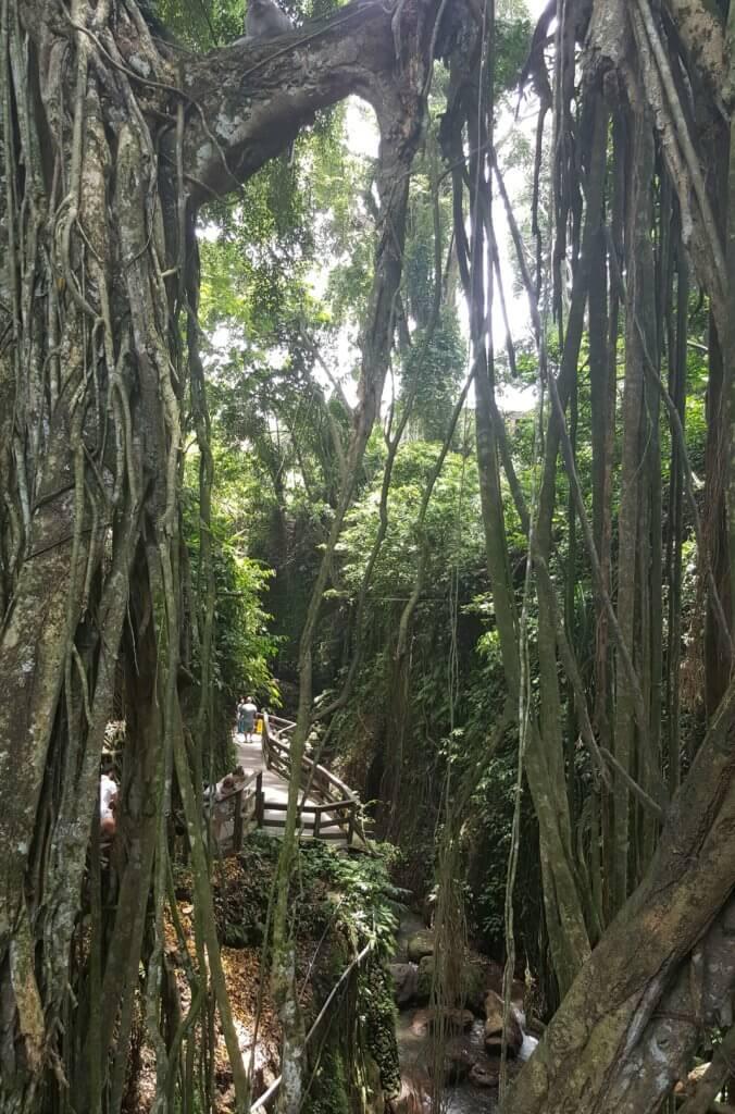 Der Affenwald in Ubud