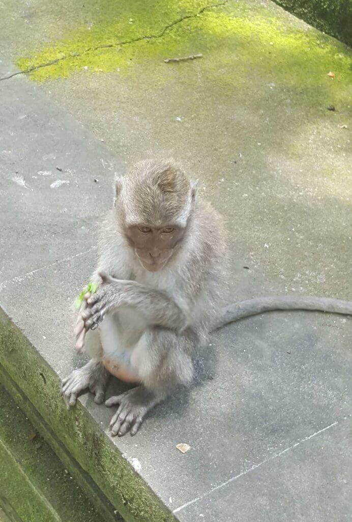 Ein süßes Äffchen im Affenwald