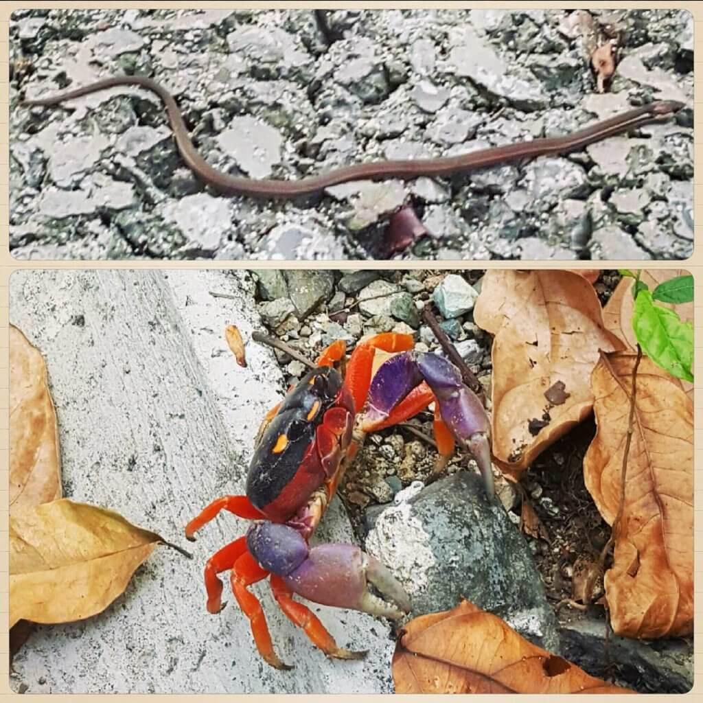 Mini-Schlange und bunter Krebs
