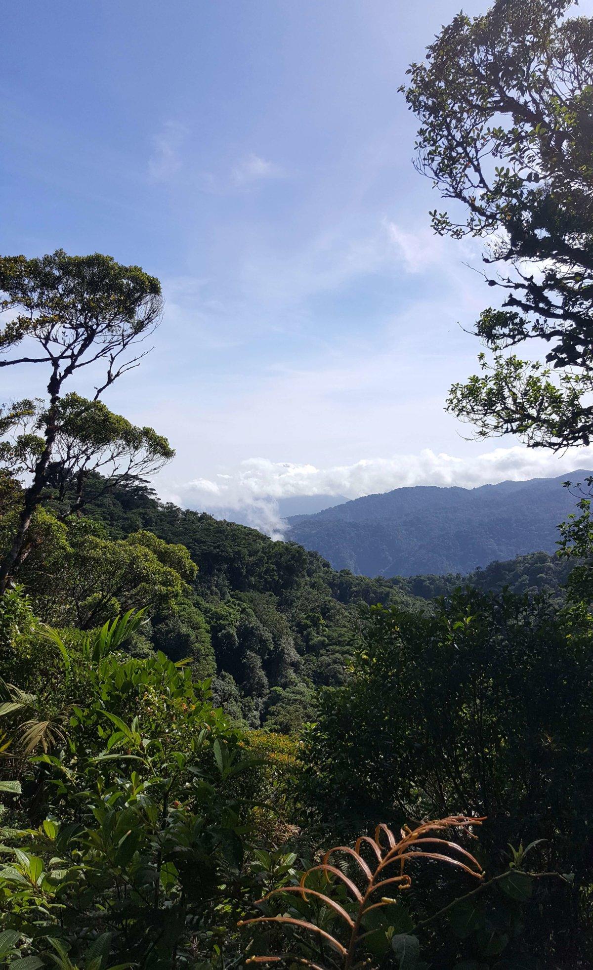 Zwischen Nebelwäldern und Vulkanen – Von Santa Elena nach La Fortuna
