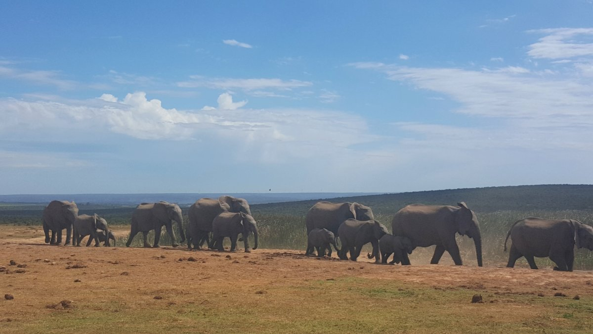 Auf Safari in Südafrika