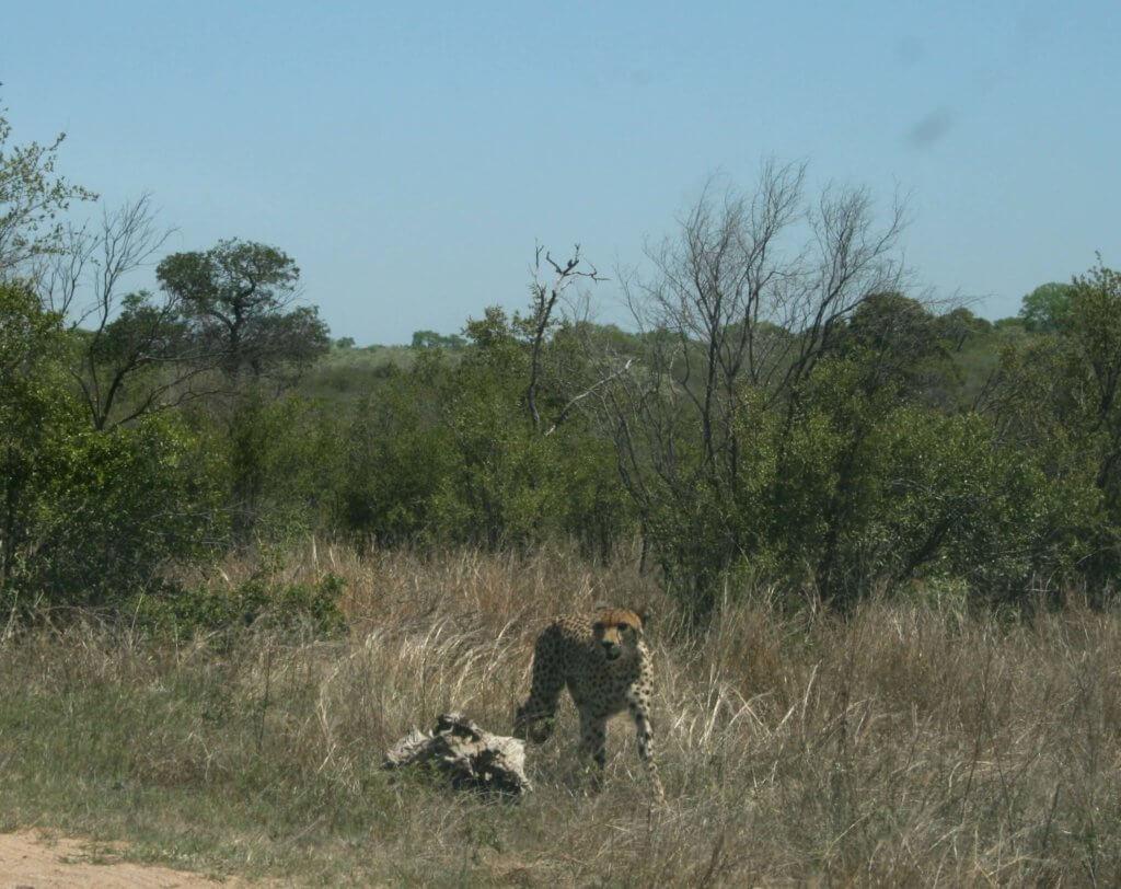 ein Leopard in der Wildnis