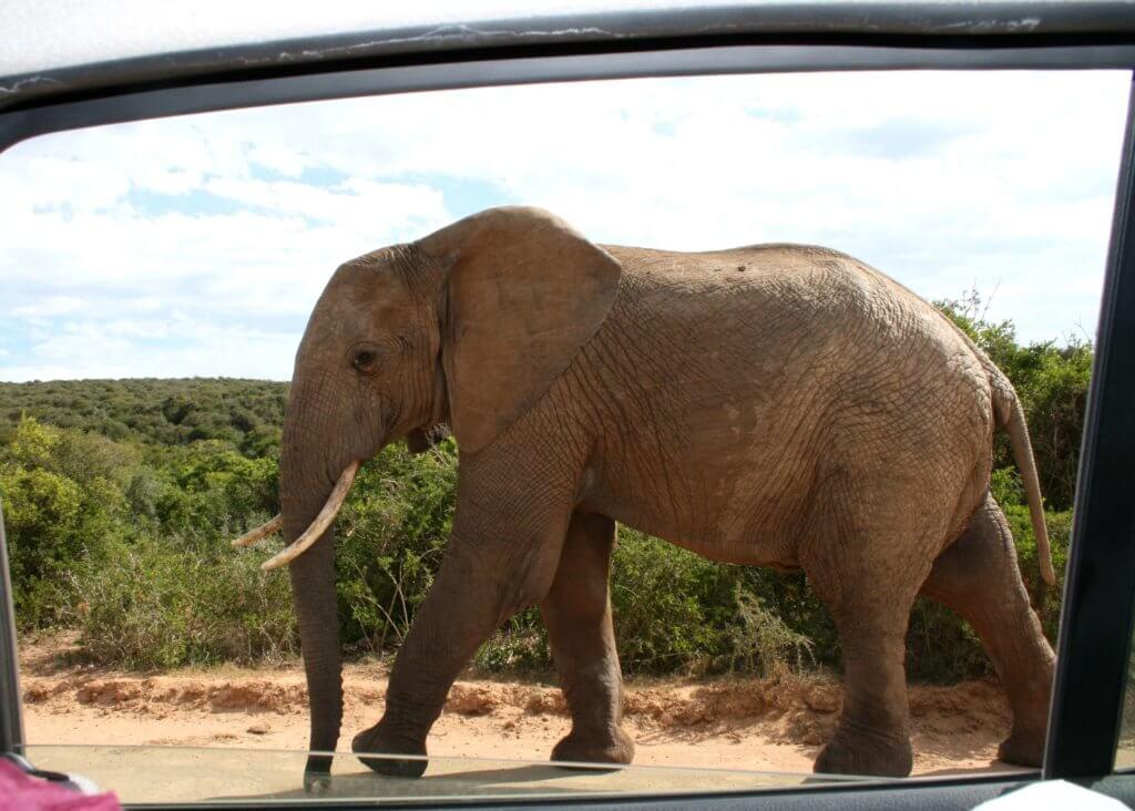 Ausblick aus der Fensterscheibe unseres Autos