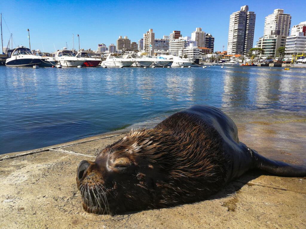 ein Seelöwe am Hafen