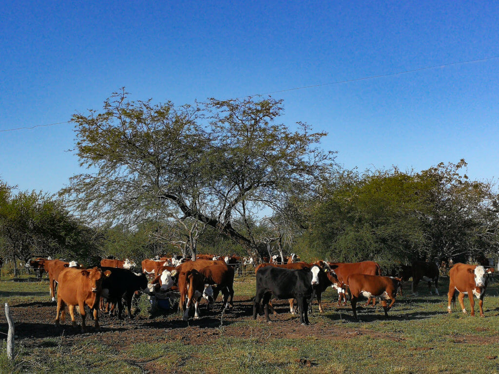 Farmleben in Argentinien
