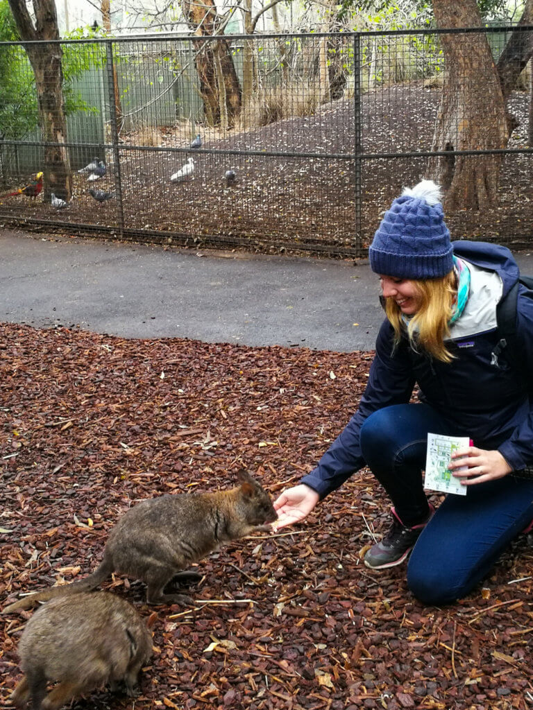 beim Känguru-Füttern